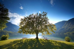 Slovenia - The lake of Bohinj