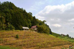 Te koop woning met wijngaarden Sladka Gora - Real Estate Slovenia - www.slovenievastgoed.nl