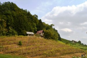 For sale vine cottage Sladka Gora - Real Estate Slovenia - www.slovenievastgoed.nl